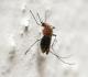 Alergie na bodnutí komára, nebo jen běžná reakce? Jak s komáry nepřijít do styku