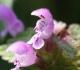 Bylinná léčba ekzému, astmatu a alergií: Přehled užitečných léčivých rostlin
