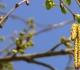 Pylová sezona trvá deset měsíců v roce