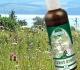 Jak porazit alergii přírodními prostředky