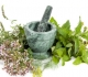 Léčivé rostliny při alergiích a ekzémech – klady a zápory přírodní léčby