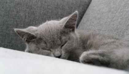 Kočky jsou doslova továrnami na alergeny – ke smůle všech alergiků (foto: SXC)