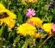 Při alergii na včelí bodnutí nejezte mateří kašičku
