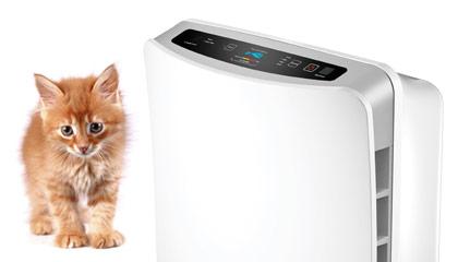 Při alergii na kočky oceníte čističku vzduchu