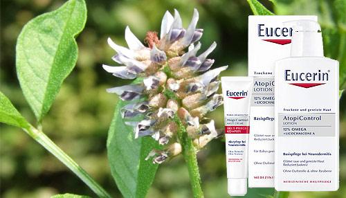 Eucerin do spousty svých produktů přidává licochalcon, což je výtažek z lékořice rodu Glycyrrhiza inflata rostoucí v Číně