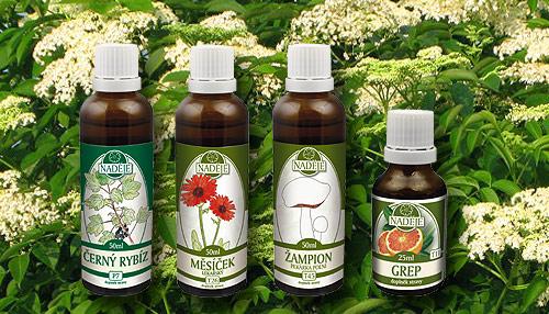 Čtveřice léčivých rostlin, které paní Podhorná nejčastěji doporučuje lidem s pylovou alergií